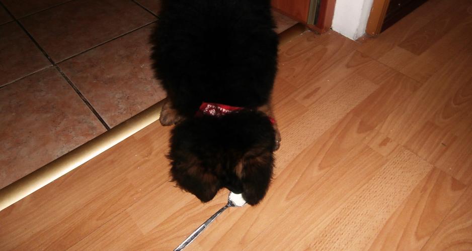 wychowanie szczeniaka to ciężka sprawa