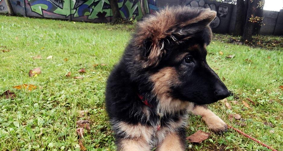 jak wybrać hodowlę psów kontakty z psami