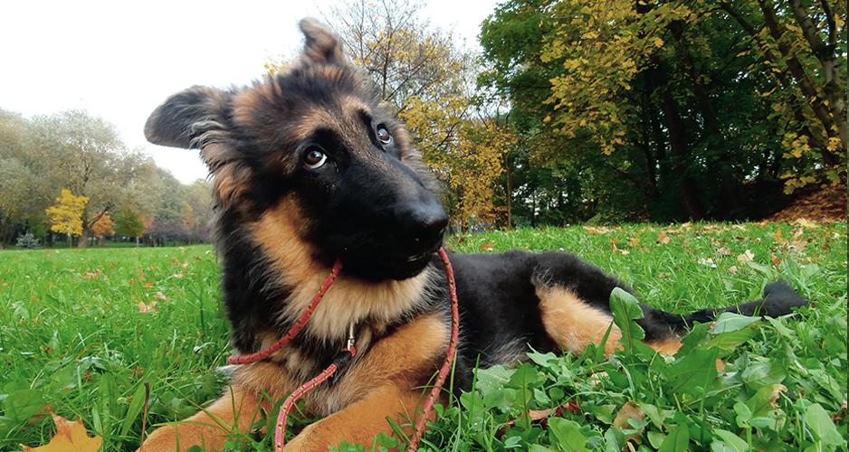 psy są niesamowite