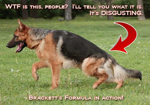 fucked_up_german_shepherd_bracketts_formula2