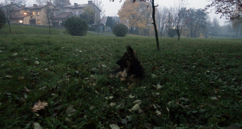 mgła - trening ze szczeniakiem