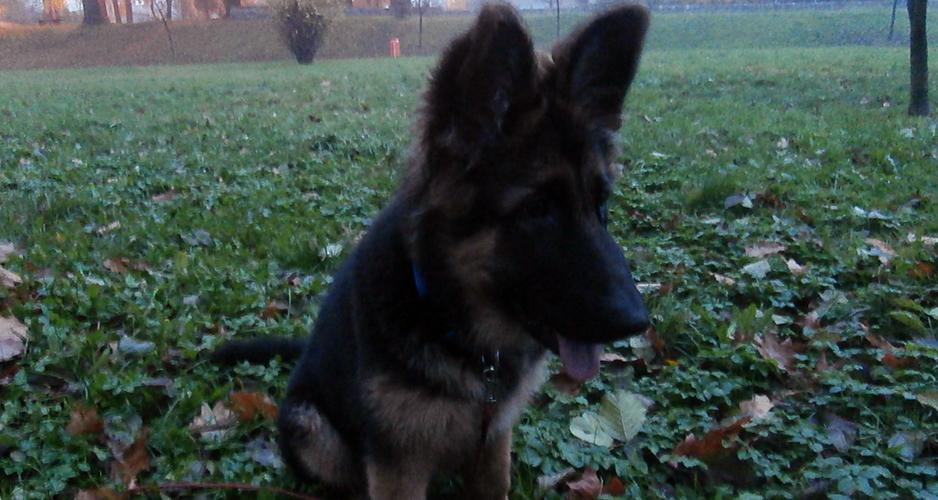 trening ze szczeniakiem we mgle