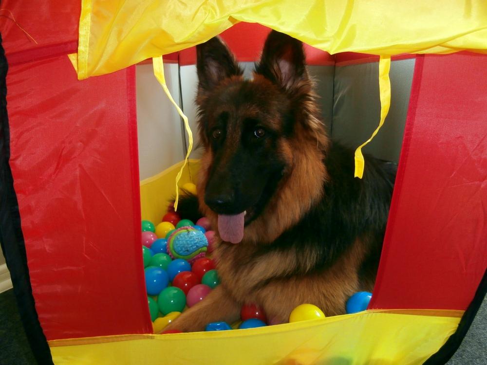 pies i zabawa