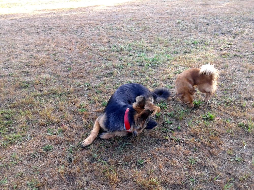 Nawet małe psiaki chętnie bawią się z większymi