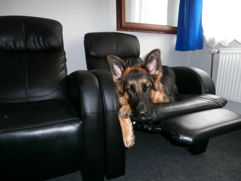 pies w mieszkaniu