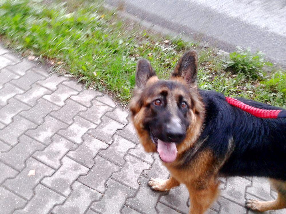 Prawdziwa, szczera radość psa ze spaceru ;)