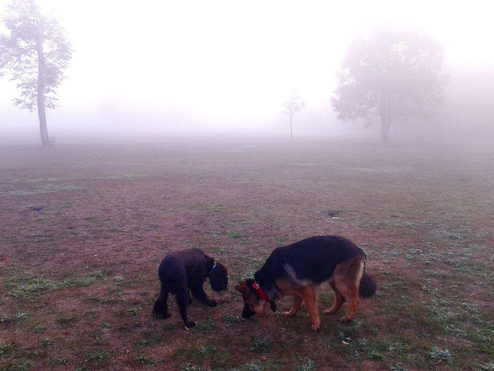 Taka mgła, a pieseły się bawią