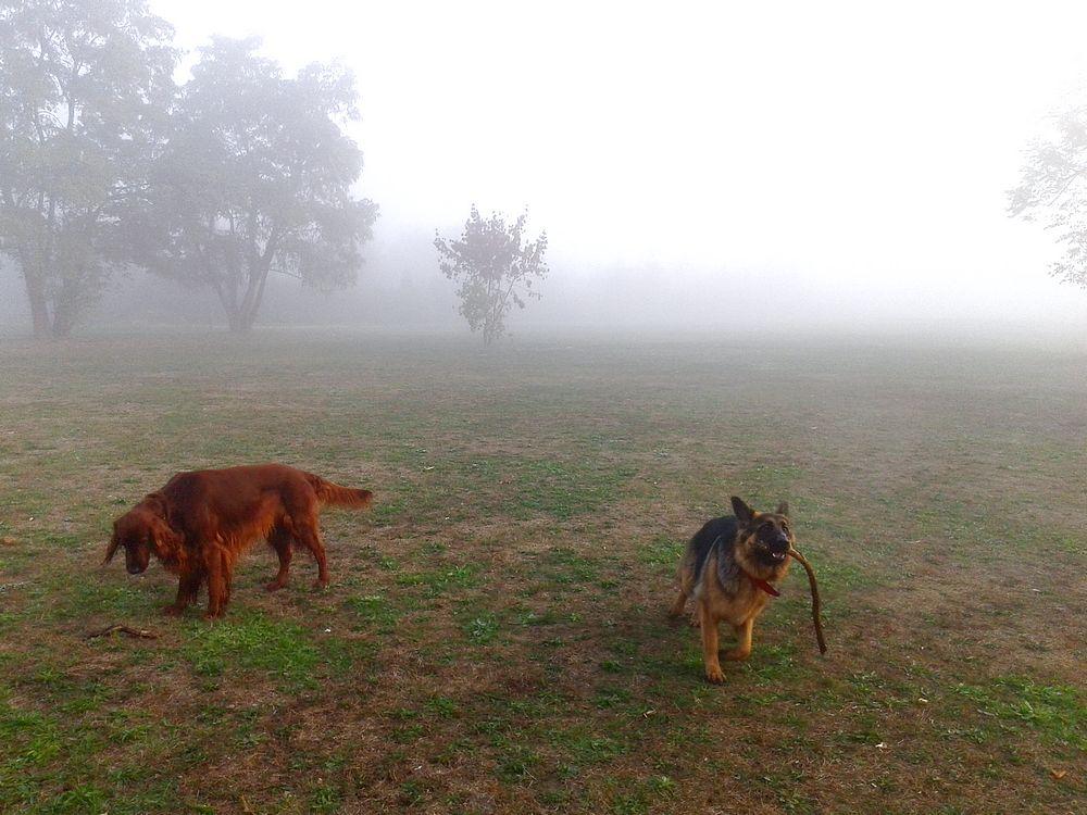 Legion kocha patyki i kocha nimi zaczepiać inne psy