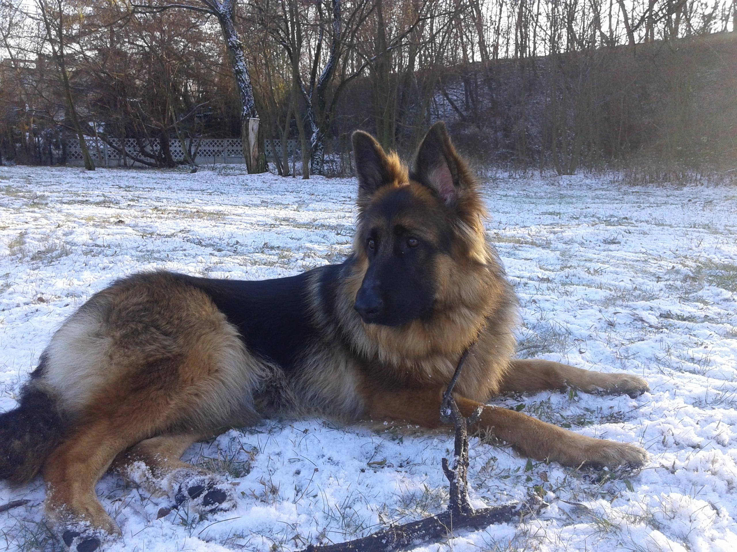 życie z psem i idzie zima