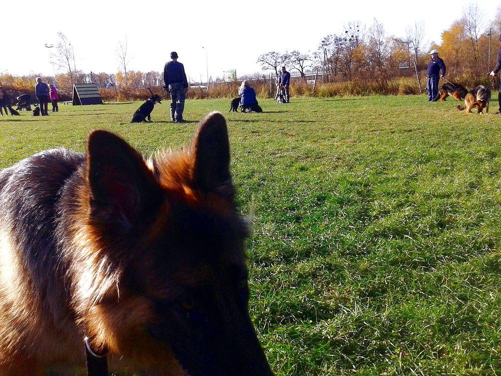 szkolenie pies towarzyszący