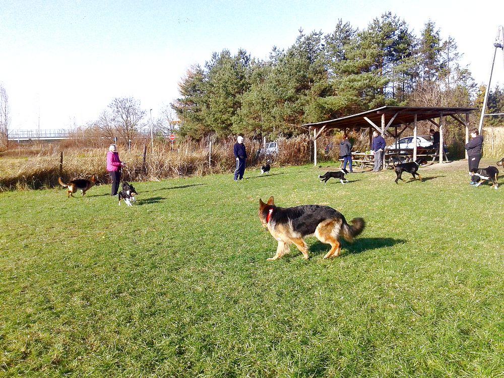 pies na szkoleniu PT