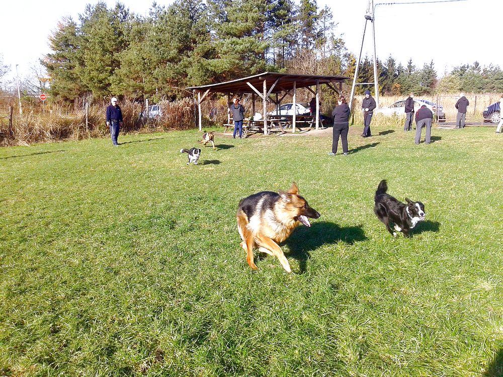 pies na szkoleniu