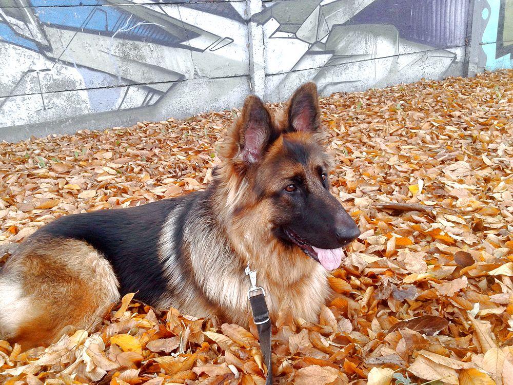 szkolenie psa i po szkoleniu
