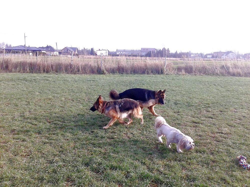 psy po szkoleniu