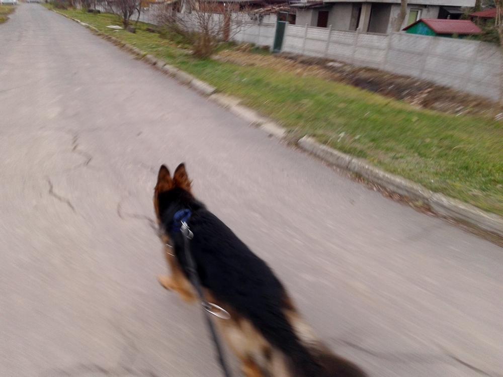 pies biega