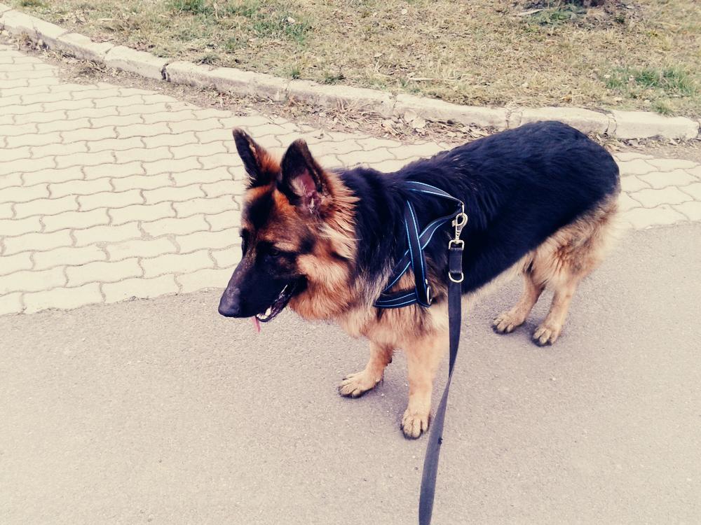 szelki do biegania z psem