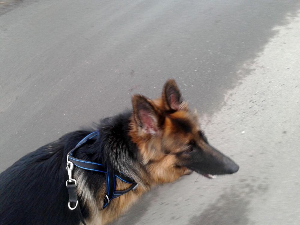 bieganie z psem jak to zrobić