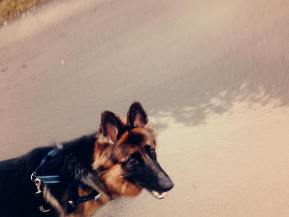 jak biegać z psem?