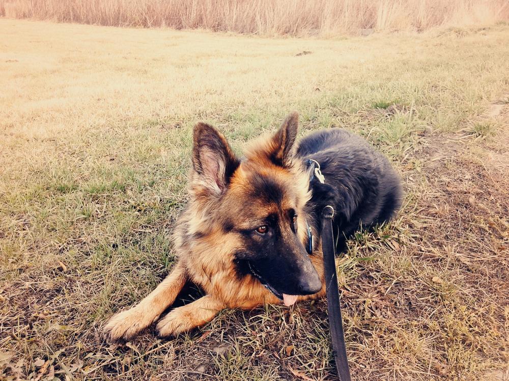 odpoczynek po bieganiu z psem