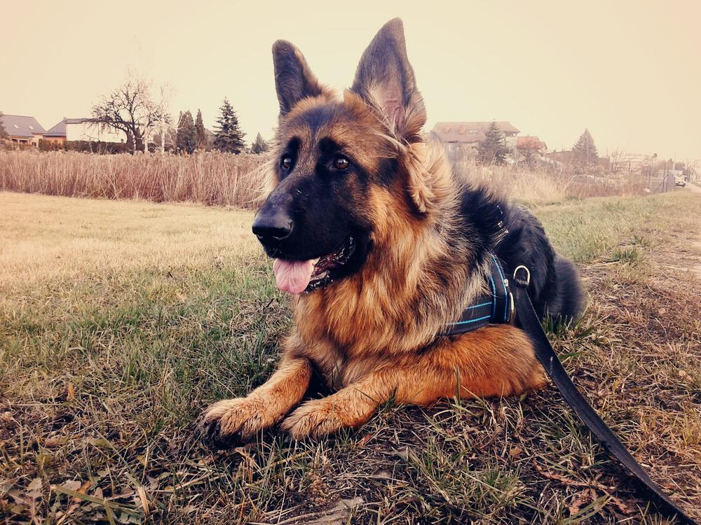 życie z psem i bieganie z psem