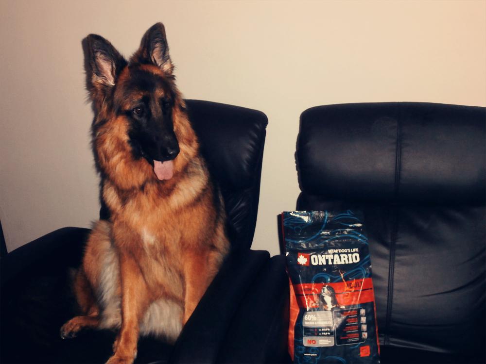 suche jedzenie dla psa