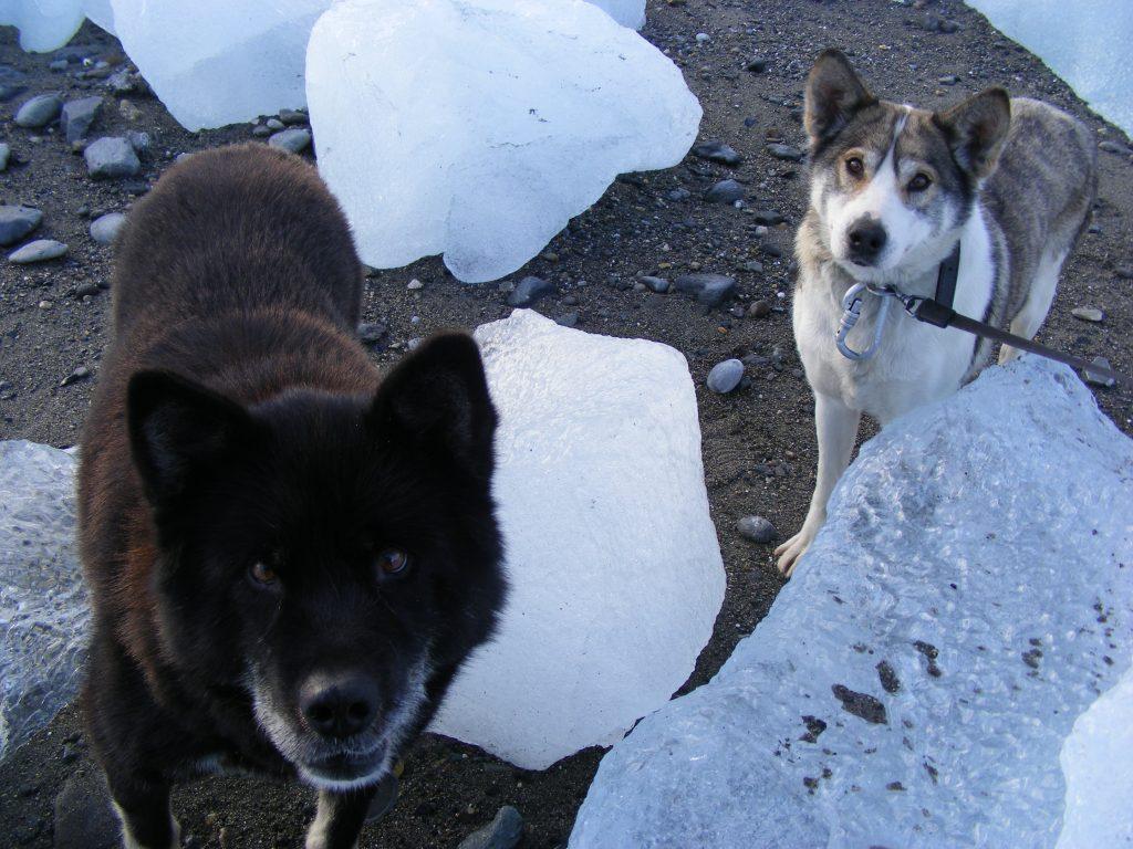 wspólny spacer z psem w bazie polarnej