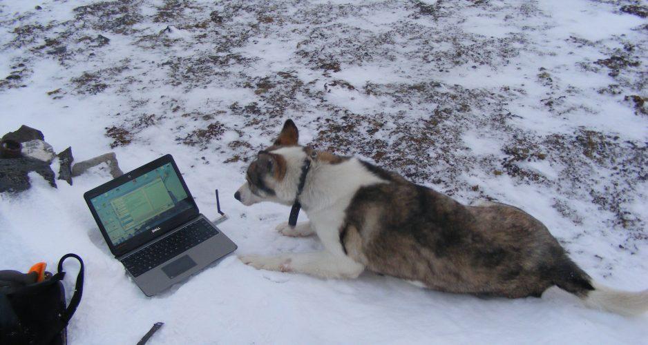 pies w bazie polarnej
