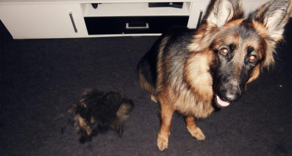 furminator dla psa długowłosego
