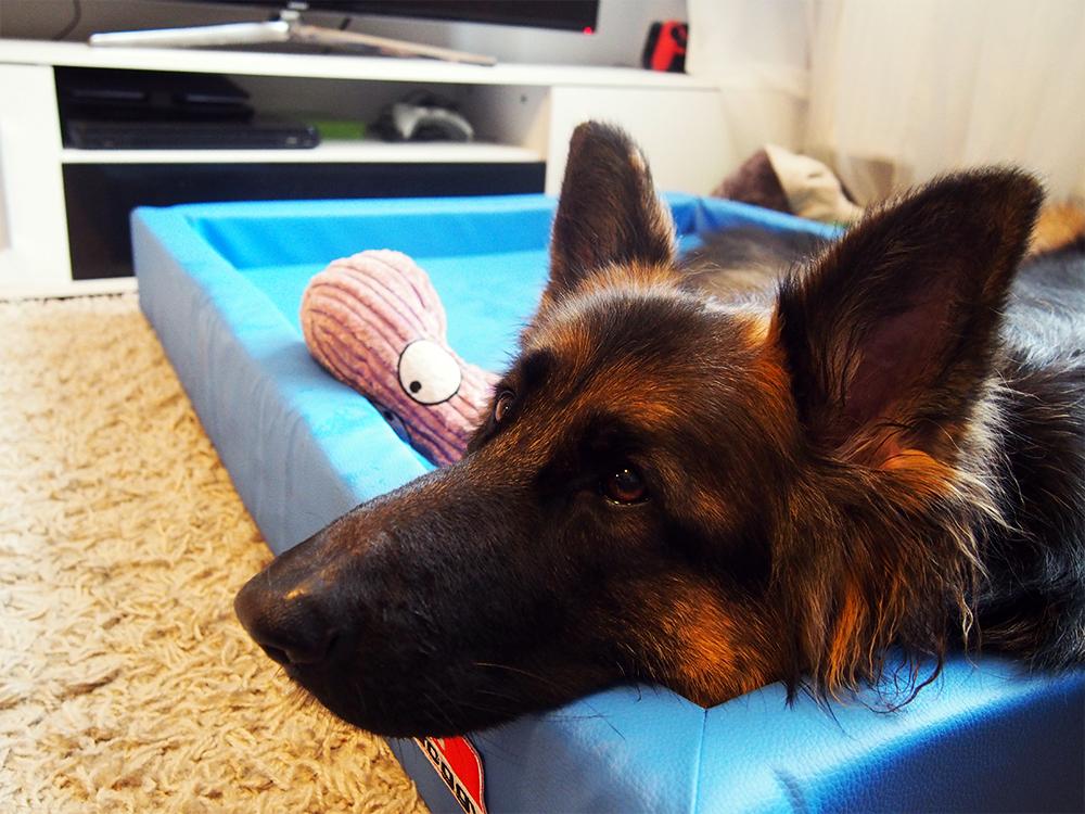 zabawki dla psa top 5