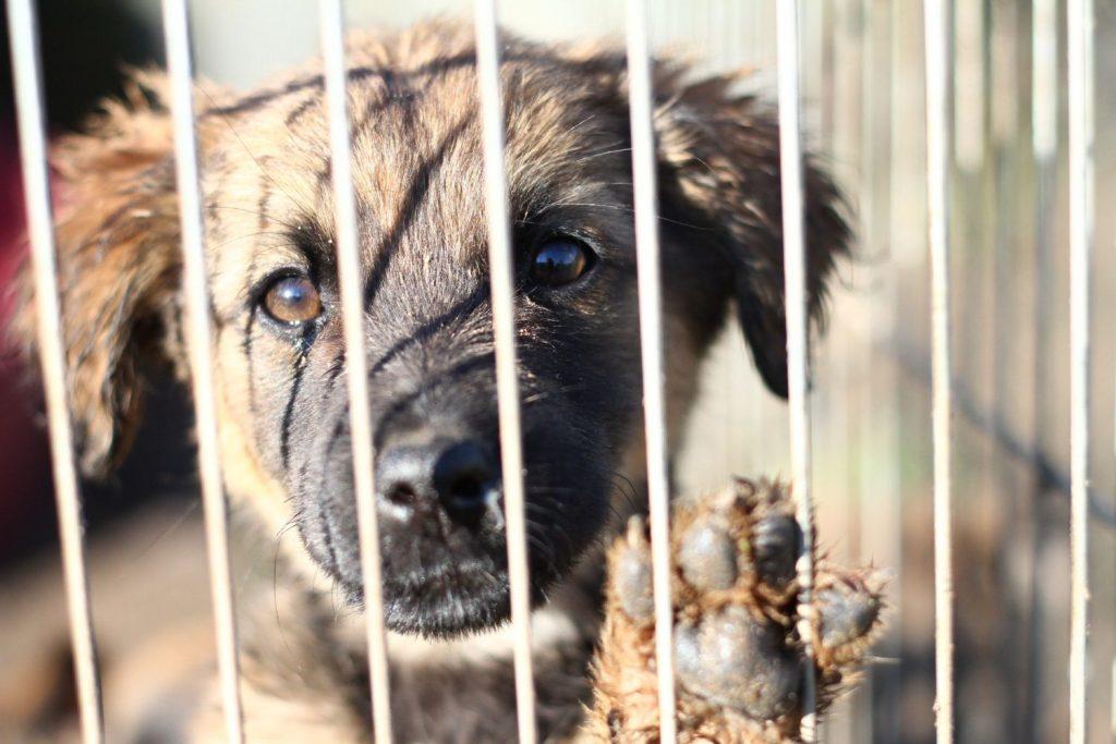Znalezione obrazy dla zapytania pies schronisko