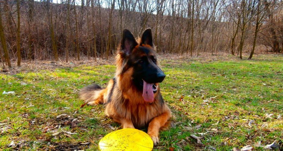 frisbee dla psa