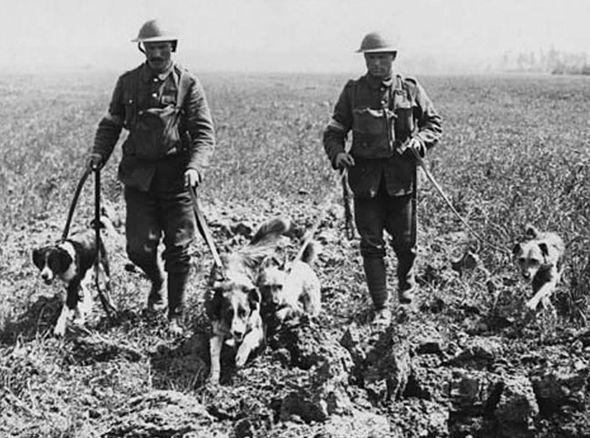 historia psa pies w zyciu czlowieka