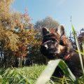 dlaczego warto karmić psa karmą bezzbożową artykuł