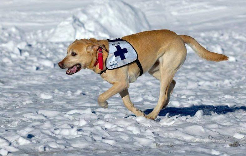ośrodek szkoleniowy dla psów