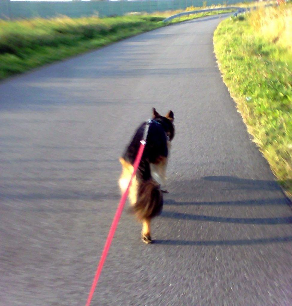 bieganie z psem jak zacząć
