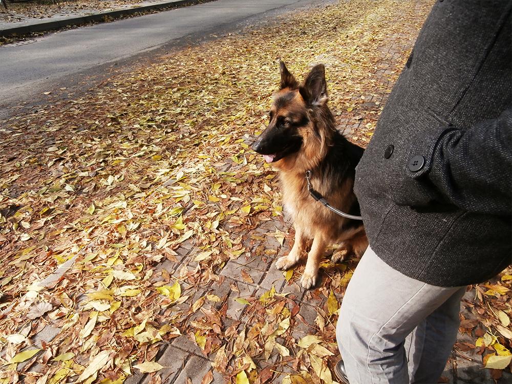 jak wybrać rasę psa dopasuj psa