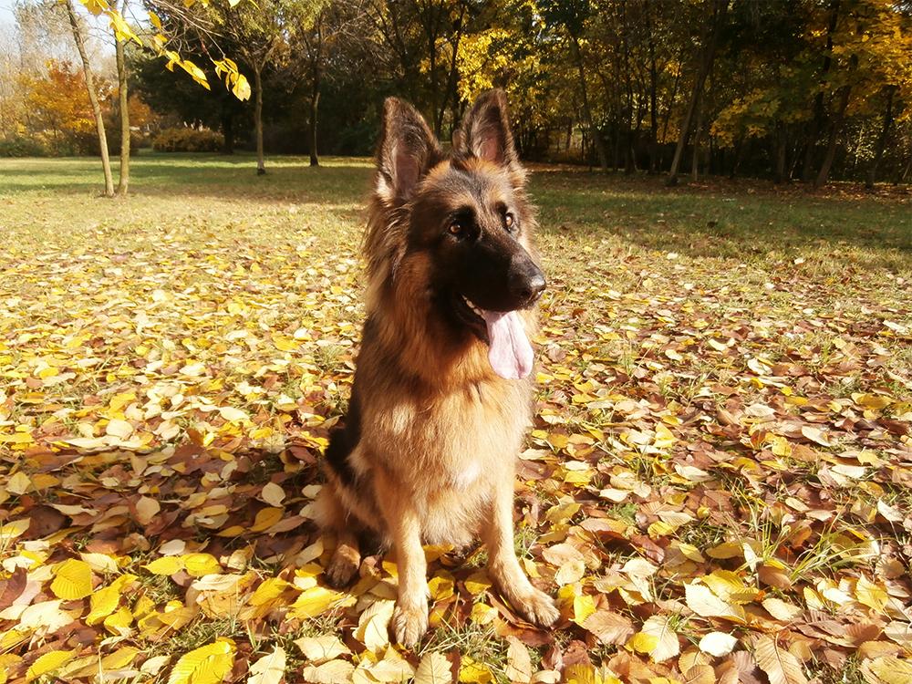 jak wybrać rasę psa wybieramy rasę psa