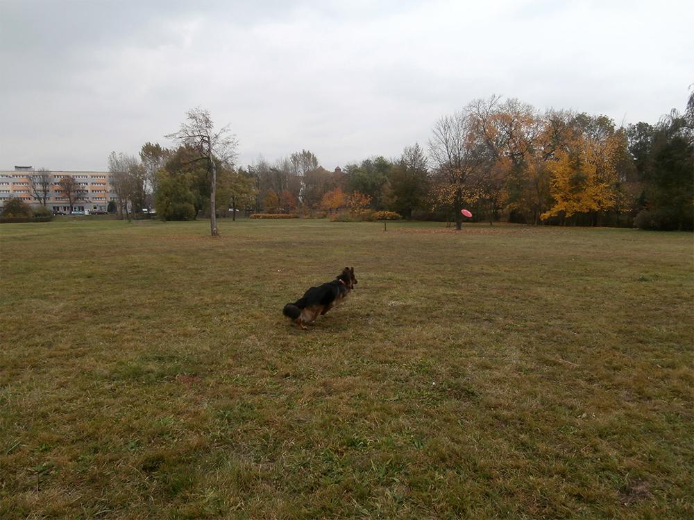 pies czy suka bez znaczenia