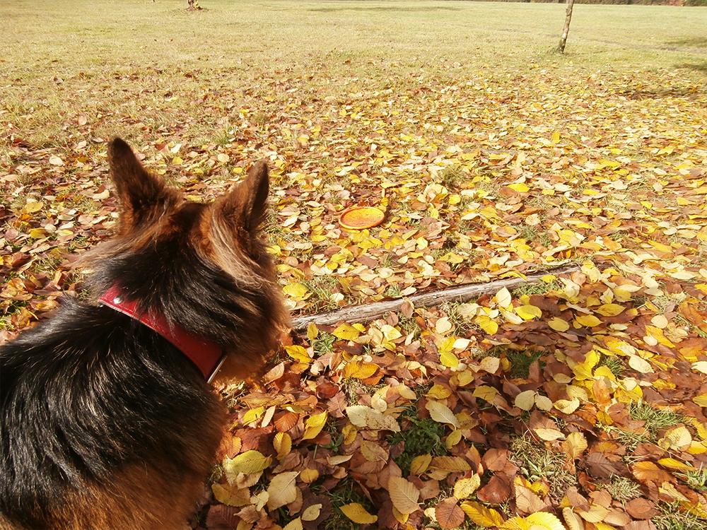 jak wybrać rasę psa wskazówki