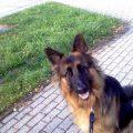 spacer z psem na smyczy