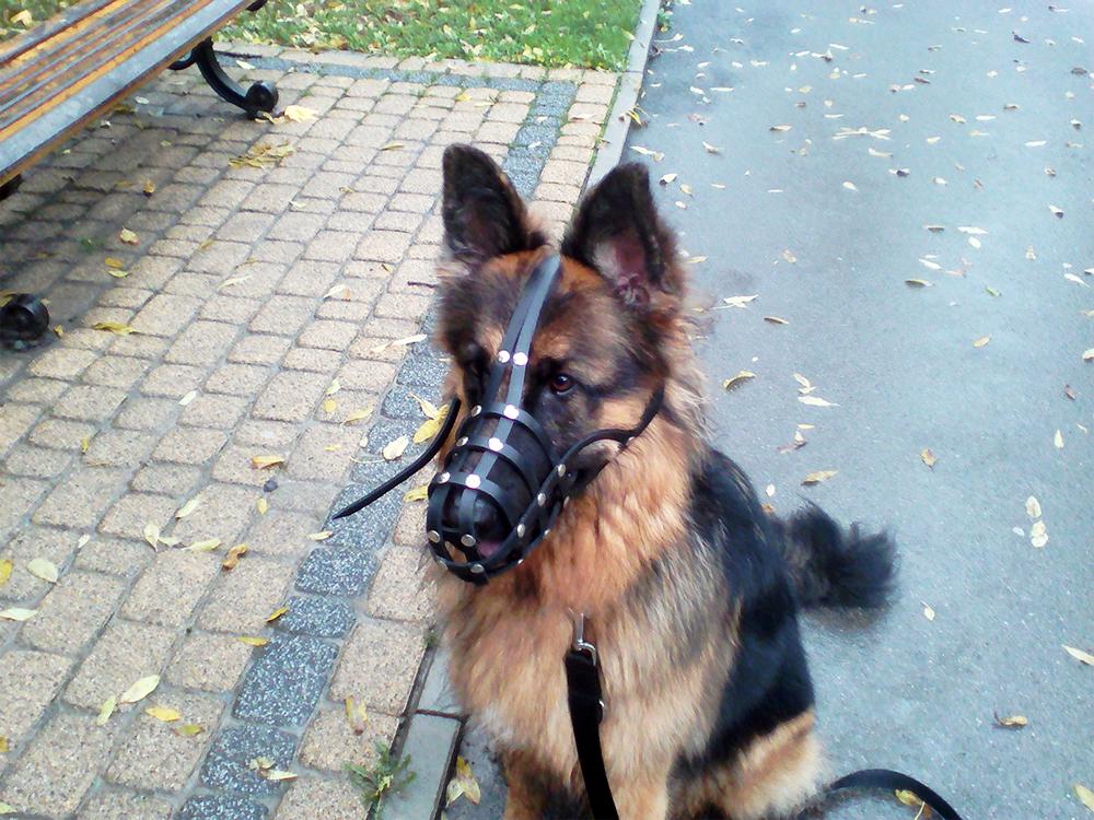 jak uczymy psa samokontroli
