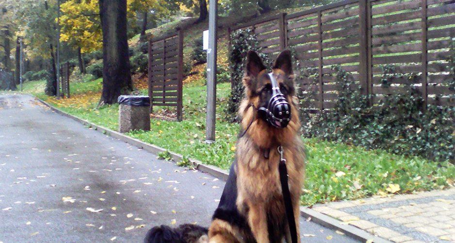 uczymy psa samokontroli przy innych psach