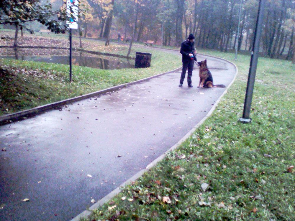 owczarek niemiecki uczymy psa samokontroli przy innych psach