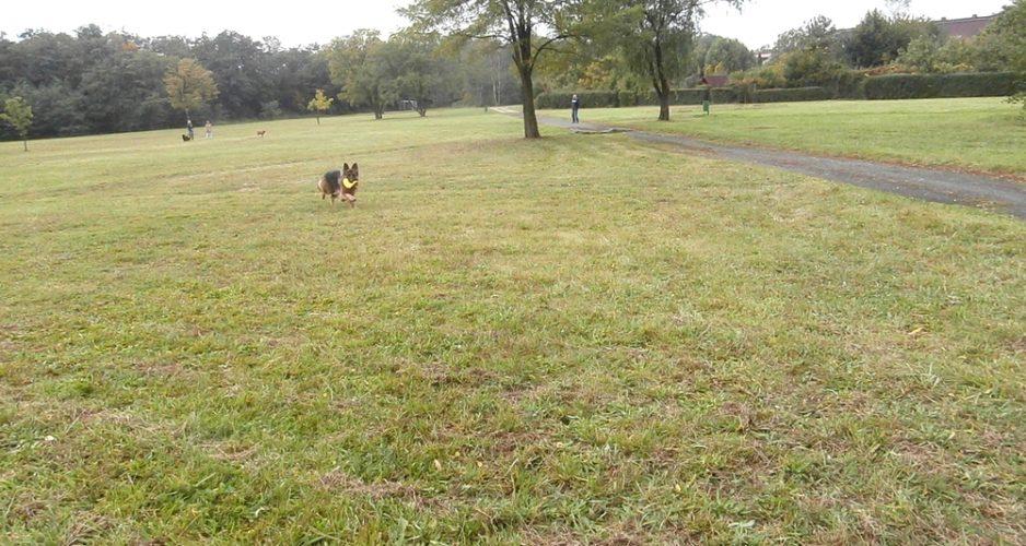 życie z psem nauka chodzenia na smyczy