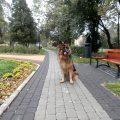 jak nauczyć psa chodzić na smyczy szkolenie dzień 6