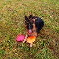 jak nauczyć psa chodzić na smyczy przy nodze 16
