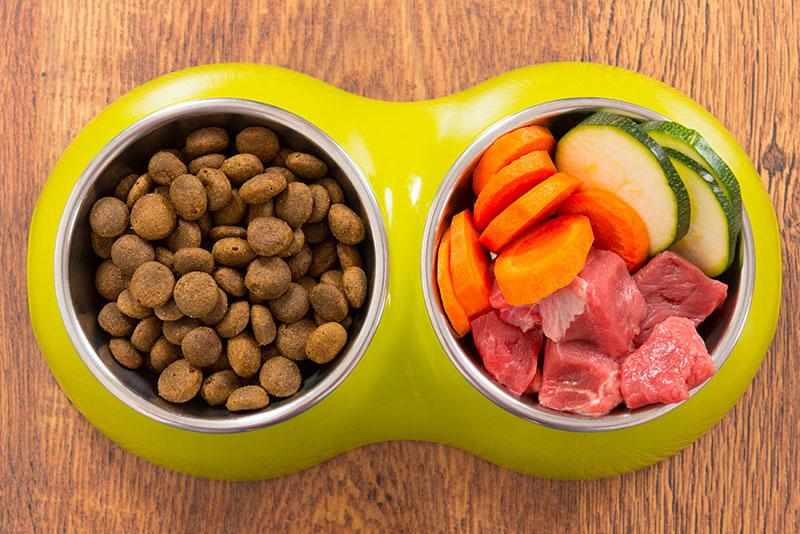 dieta psa zdrowie jedzenie