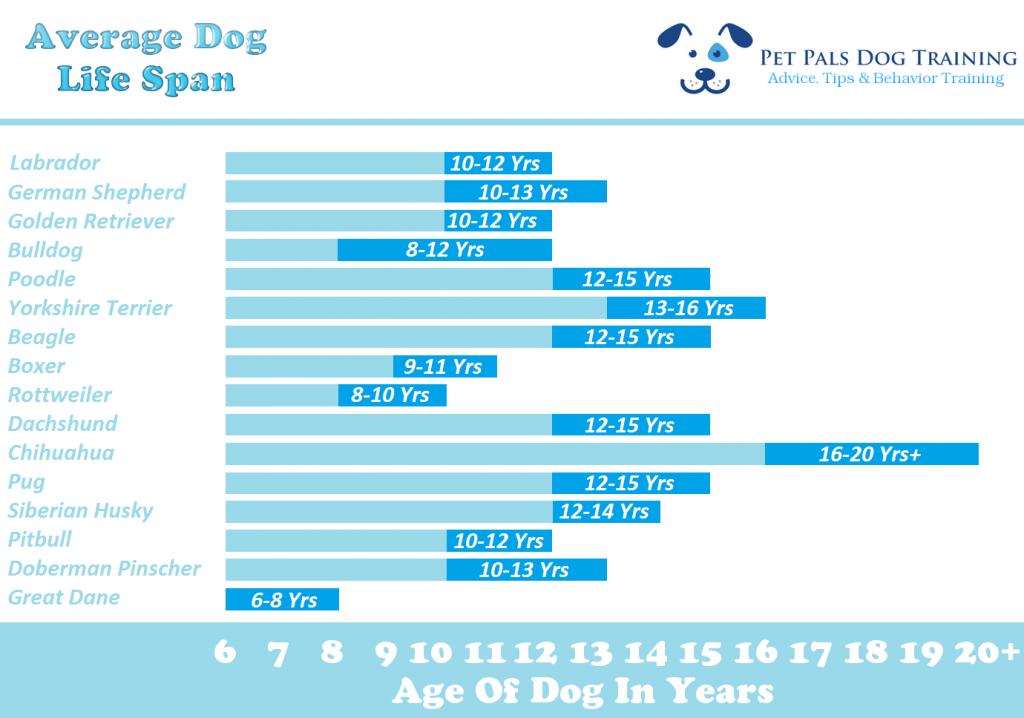 długość życia naszych psów