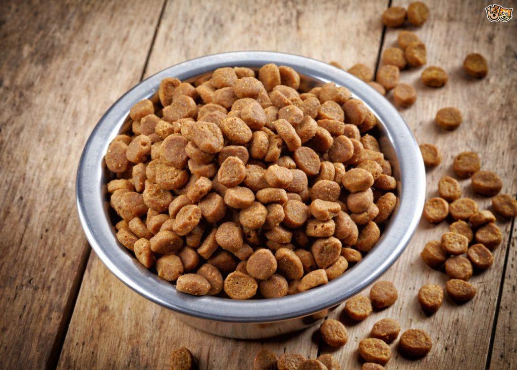 psie jedzenie dieta psa