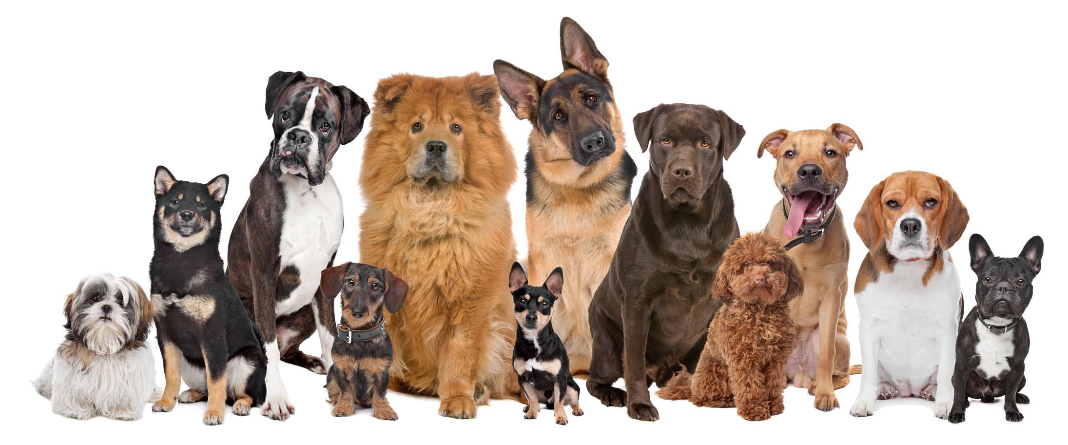 Jak Wybrać Rasę Psa życie Z Psem